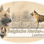 Belgische Herder - Laekense