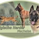 Belgische Herder - Mechelse