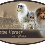 Schotse Herder - Langhaar