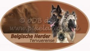 Belgische Herder - Tervuerense