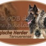 Belgische Herder - Tervueren