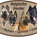 Alle Belgen met rustigere achtergrond