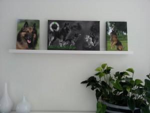 bewerking frodo op canvas.nl
