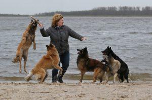 FOTO 3 samenvoeging, oneffenheden weggepoetst en extra hond in toegevoegd!